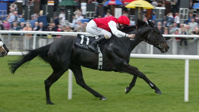 Grecian Dancer: in foal to Galileo she bolted up in a Group 3 at the Curragh in 2008