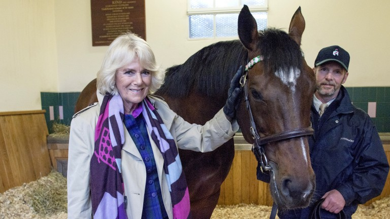 Frankel, with stallion man Rob Bowley, receives a visit from the Duchess of Cornwall at Banstead Manor Stud