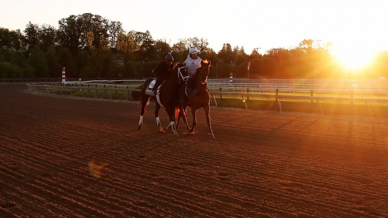 Always Dreaming: works at Pimlico ahead of the Preakness Stakes on Saturday