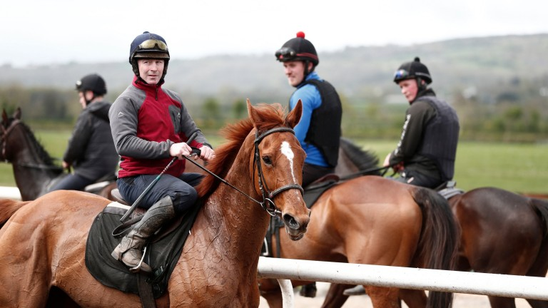 Annie Power (David Casey) on the gallops at Closutton in April 2017