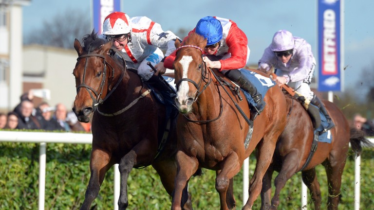 Udontdodou (left) chases home Sainted at Doncaster last year