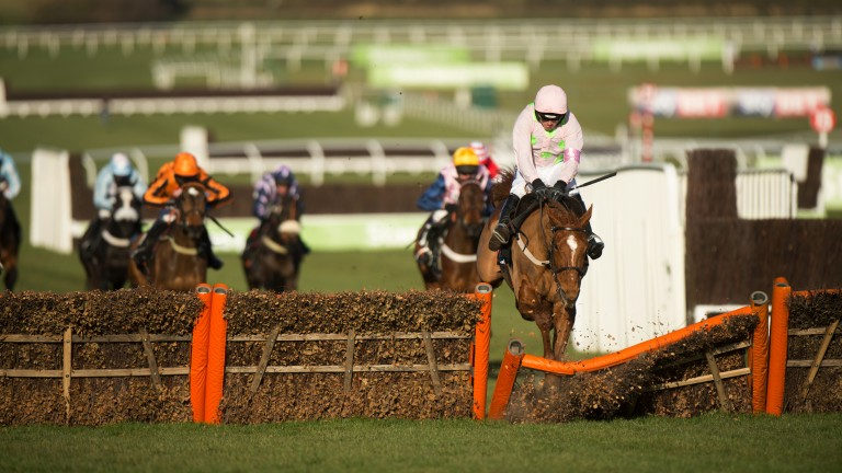 Dramatic moment: Annie Power hits the final hurdle before her infamous fall in the 2015 OLBG Mares' Hurdle at Cheltenham