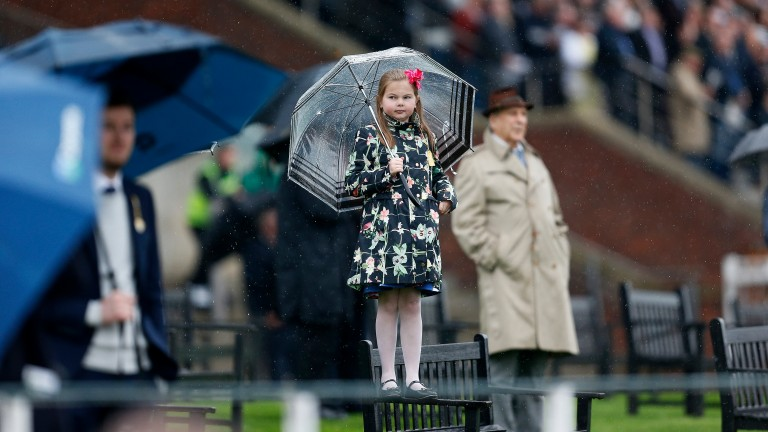 Balancing act: a young racegoer determined to get a better view displays great poise