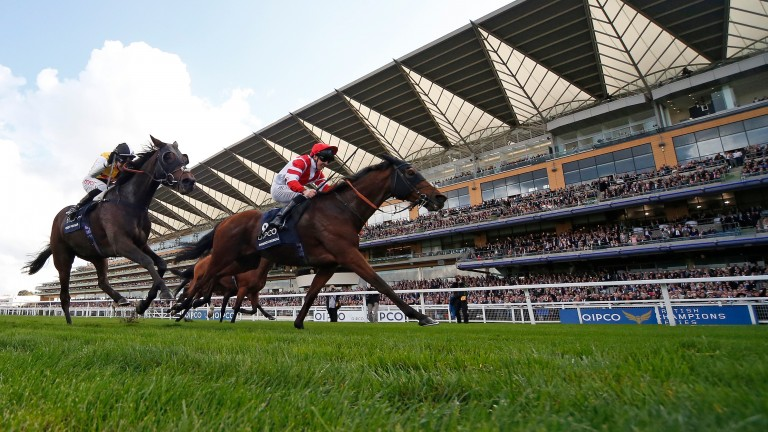Sheikhzayedroad: won the Long Distance Cup at Ascot on British Champions Day