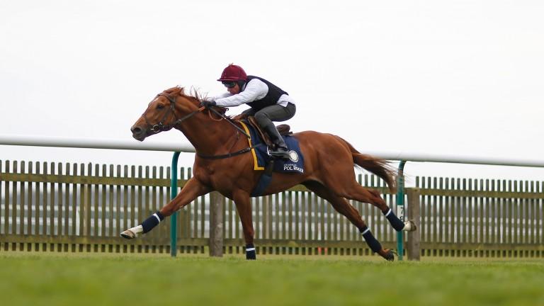Galileo Gold impresses Frankie Dettori in a racecourse gallop on the Rowley Mile
