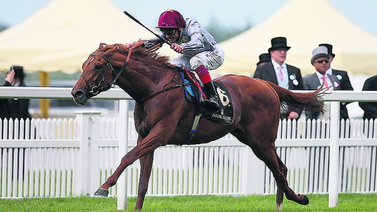 Galileo Gold: St James's Palace Stakes scorer will stand at Tally-Ho at a fee of €15,000