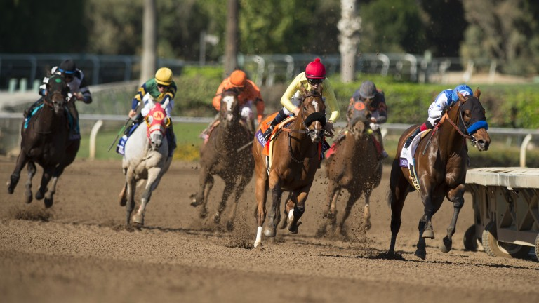 Masochistic (red cap): finished second in the Breeders' Cup Sprint