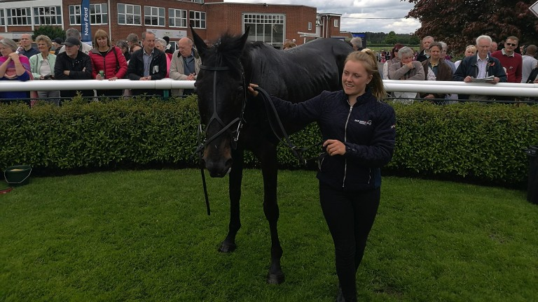Too Many Diamonds after his victory at Market Rasen in May last year