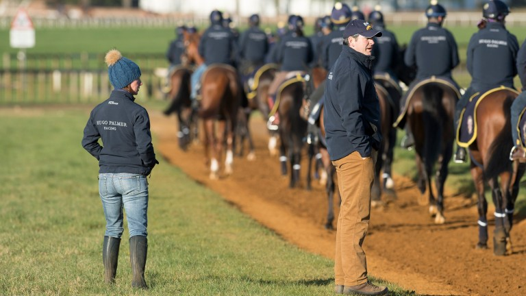 Hugo Palmer, and his assistant Angela Davies, watch first lot walk down Warren Hill last month. He is now conducting 'an enormous number of tests' on his string