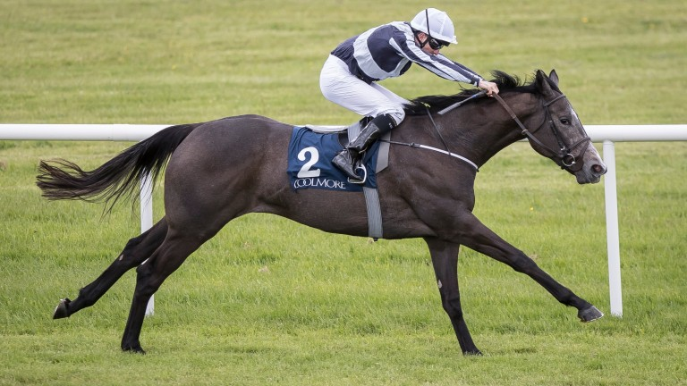 Alpha Centauri and Colm O'Donoghue en route to winning at Naas
