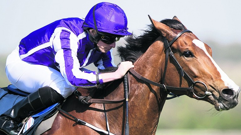 Minding: forced to miss Ascot but moving towards a return