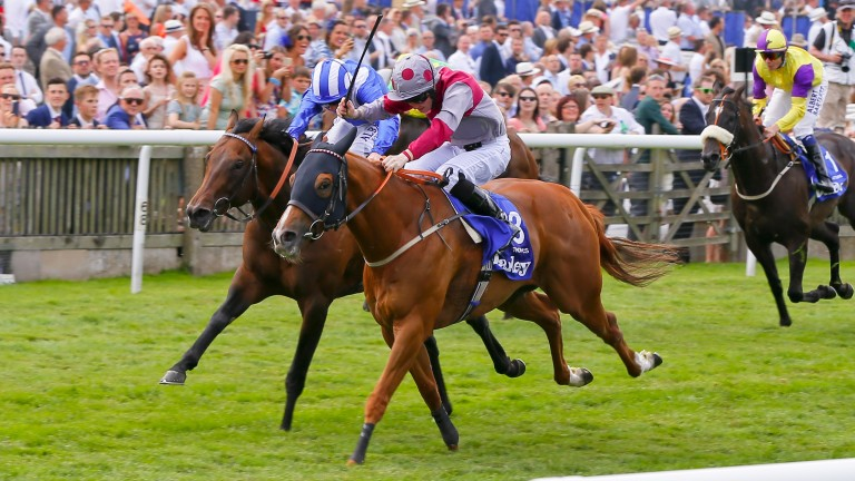 Tropics: was a nose away from winning the July Cup in 2015.