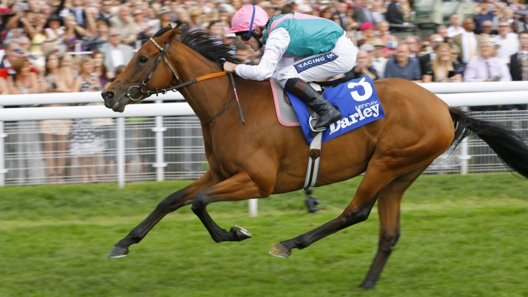 Midday: the dam of the promising Noon Star, who returns at Wetherby on Sunday