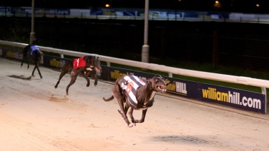 Arena Racing Company has bought Newcastle greyhound stadium (above) and Sunderland