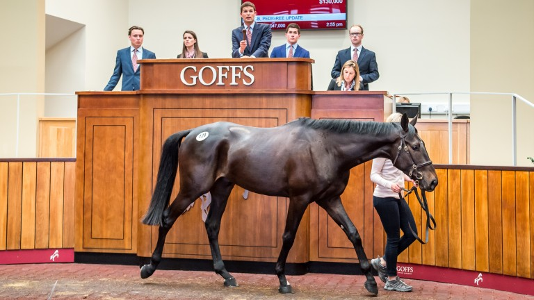 Lot 120: the French-bred son of Diamond Boy was sold to Mouse Morris for the joint sale-topping sum of £100,000