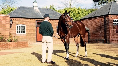 Frankel stands with his groom Rob Bowley at Banstead Manor StudSaxon Street, 22.11.12 Pic: Edward Whitaker