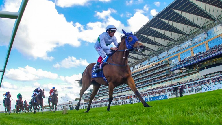 Journey: takes on three other Group or Grade 1 winners