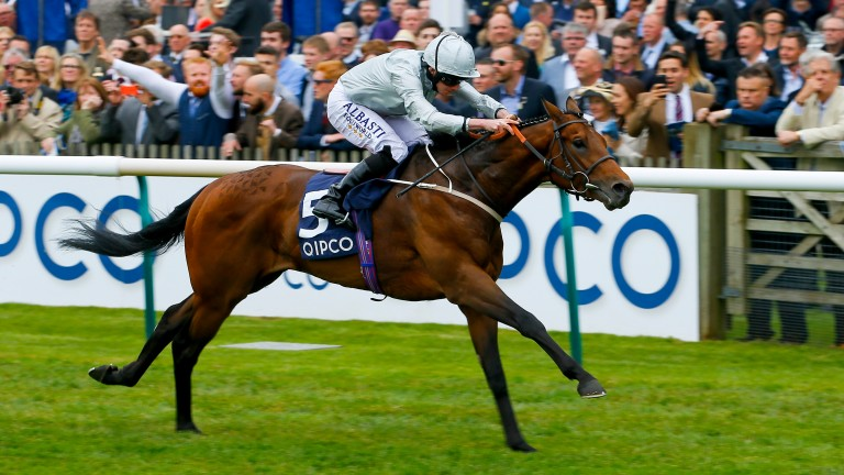 Permian: a half-brother to the much-missed dual Group 2 winner is bound for America