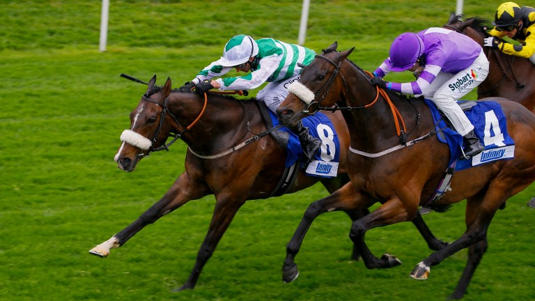 Al Qahwa (green and white): can finally get his head in front