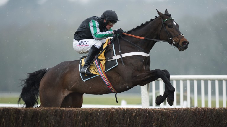 Altior: ruled out of the Tingle Creek with a wind problem