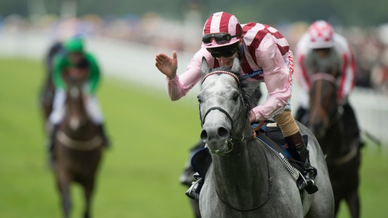 Lethal Force: his three-parts brother is one of the horses to run at the Curragh on Sunday