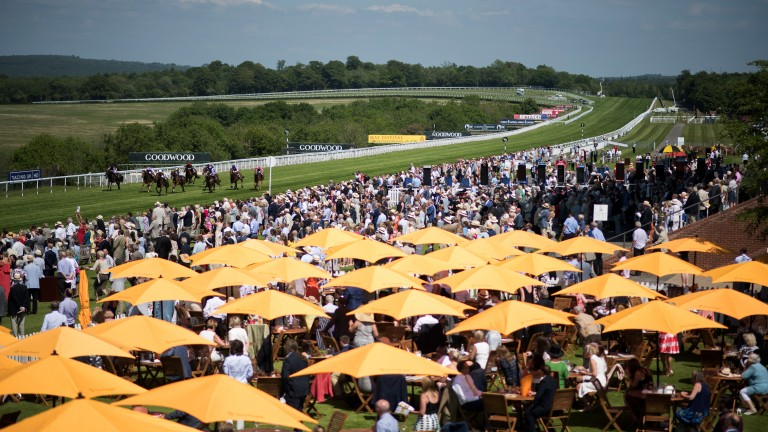 Not a bad spot: a scene which is unmistakably Goodwood as racegoers watch the second race on the card, the 7f handicap