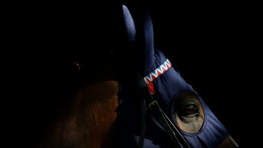 ESHER, ENGLAND - MAY 25:  The evening light catches a horses eye at Sandown Park on May 25, 2017 in Esher, England. (Photo by Alan Crowhurst/Getty Images)