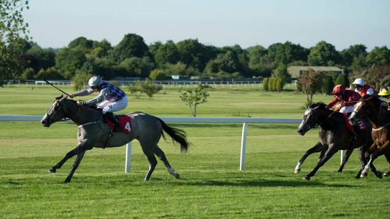 Havana Grey dominates the field to win the National Stakes