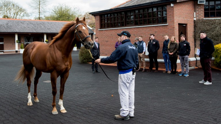 Godolphin Flying Start: the 2017-19 group will begin their training at Kildangan Stud in County Kildare on August 14