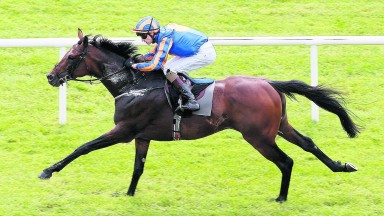 CURRAGH SAT 20 AUGUST 2016 PICTURE: CAROLINE NORRIS   ORDER OF ST GEORGE RIDDEN BY DONNACHA O'BRIEN WINNING THE PALMERSTOWN HOUSE ESTATE IRISH ST LEGER TRIAL STAKES