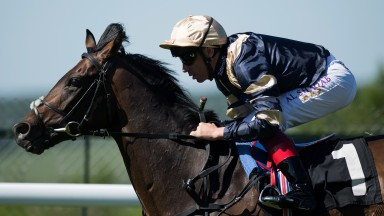 Classy colt: Khalidi appears a stayer to follow after scoring decisively in the feature contest