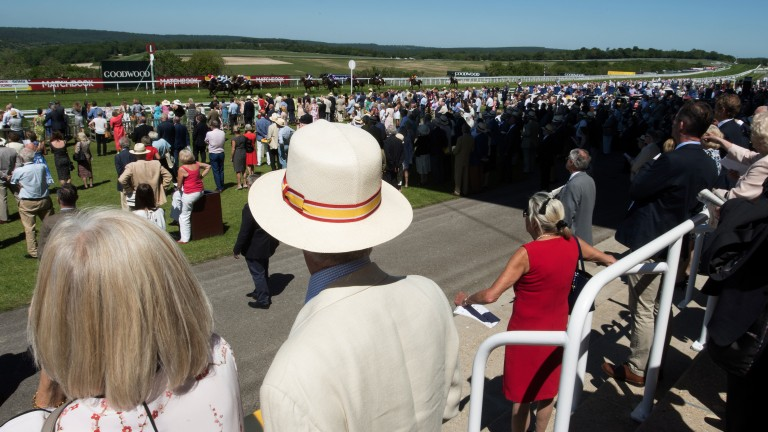 Eyes on the action: racegoers watch the finish of the 7f handicap, in which Noble Peace triumphed