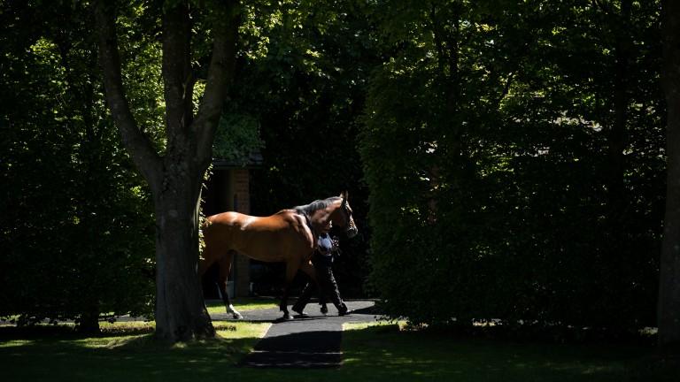 Tucked away: a runner in the 5f novice stakes walks around the pre-parade ring