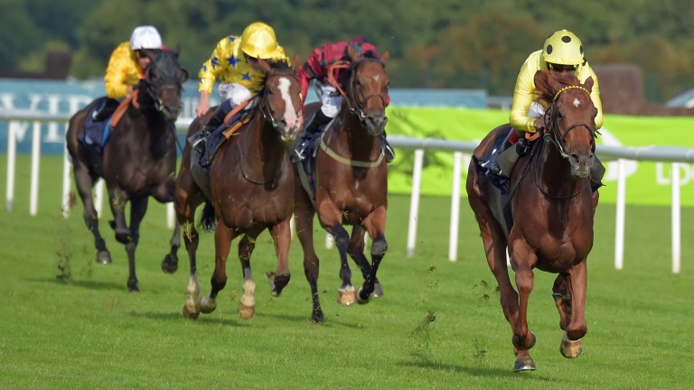 Mount Logan: expected by his trainer to go well at his favourite Goodwood
