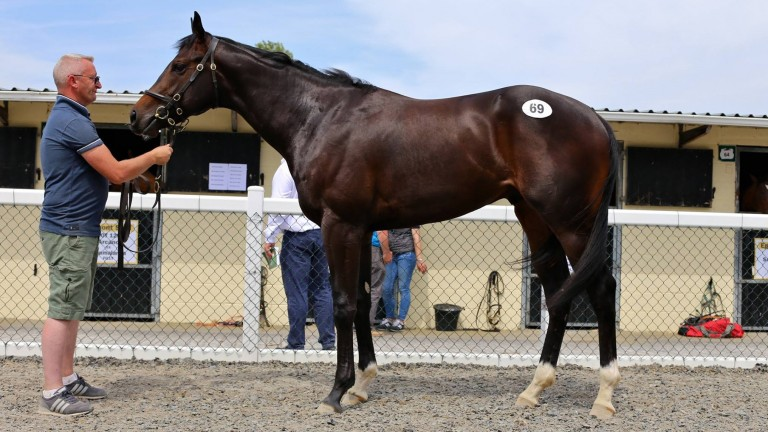 Lot 69: the sale-topping Bated Breath colt that sold to BBA Ireland for €210,000