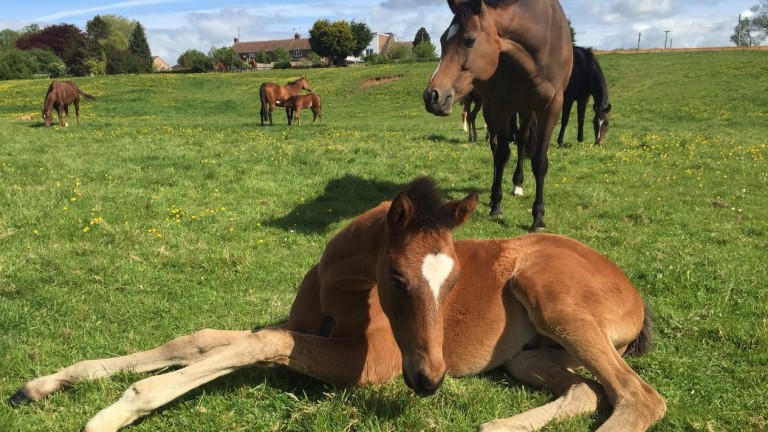 Some of the mares and foals charged with extending Manor Farm Stud's remarkable record