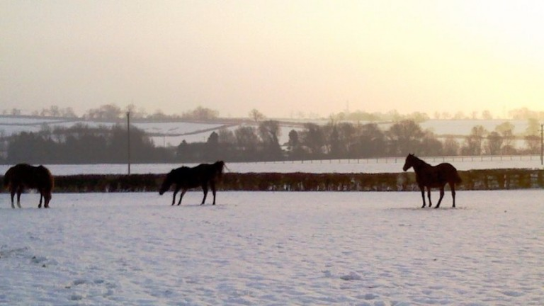 A winter scene at the Rutland stud