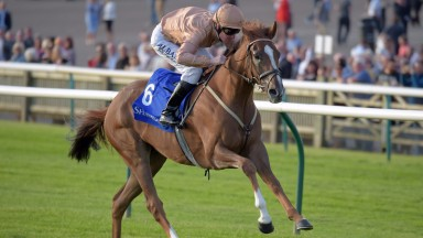 Dal Harraild: may go for the Ascot Gold Cup