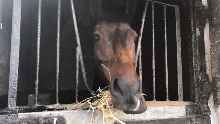 Drumlynn: Nicky Henderson's new recruit in his box at Seven Barrows