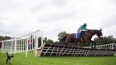 Hidden Cyclone: returns at Punchestown on Tuesday