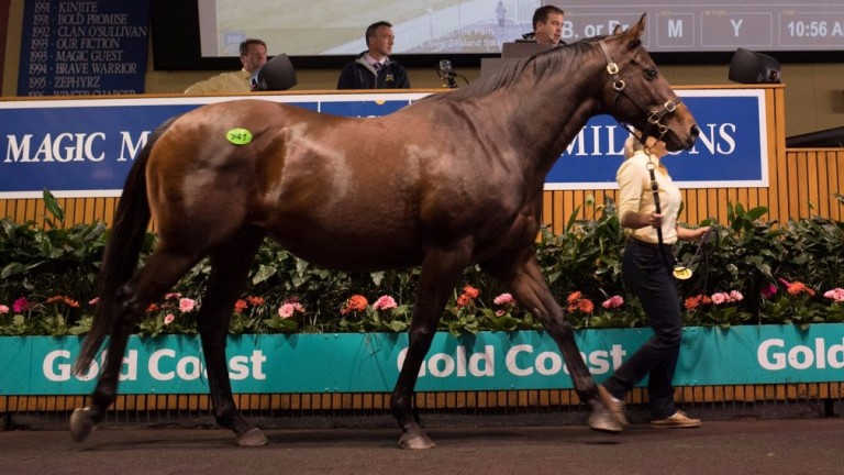 The Party Stand goes under the hammer at Magic Millions