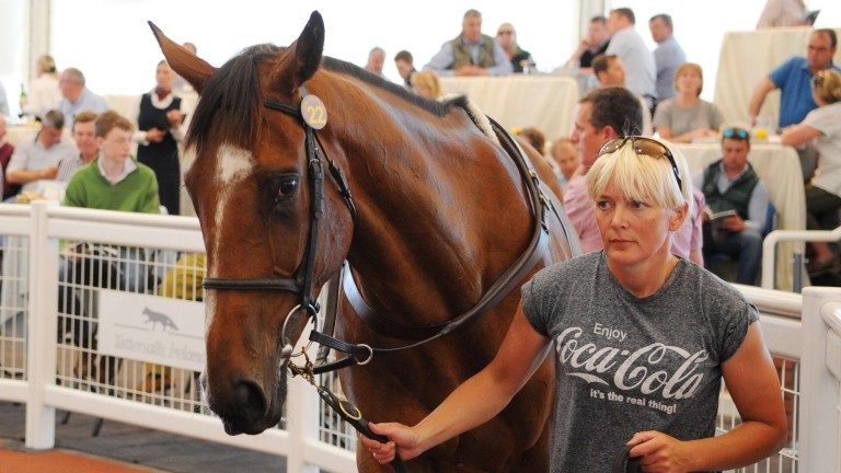 Lot 22: Carefully Selected was the first of two six-figure buys by Harold Kirk