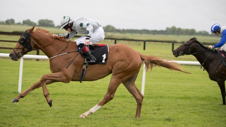 Hailstone: was an impressive winner at Fairyhouse