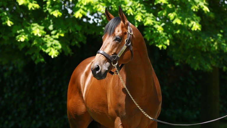 Charm Spirit: three-time Group 1-winning miler had his first winner on Monday