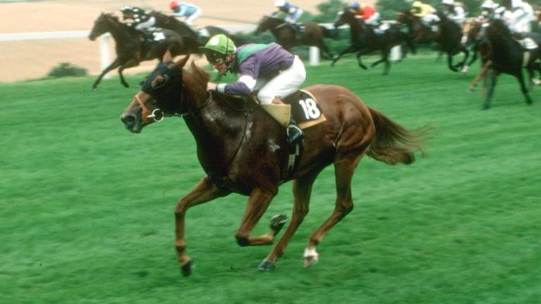 Soba: top-class sprinter was the best horse David Nicholls rode