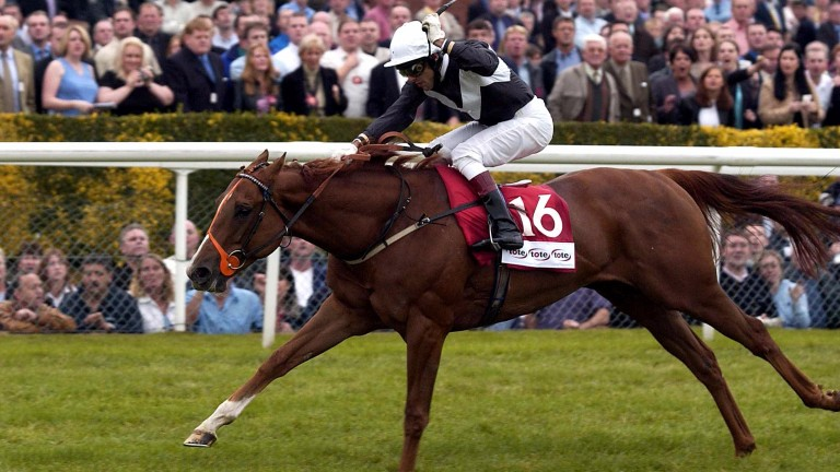 Continent wins the Ayr Gold Cup