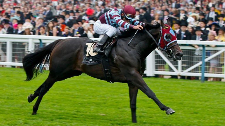 No Nay Never: first Royal Ascot winner for his sire Scat Daddy