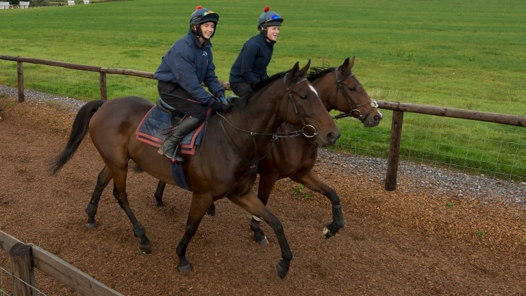 Kate Tracey and Sausalito Sunrise (nearside) trot down the wood chip gallop at Philip Hobbs's yard