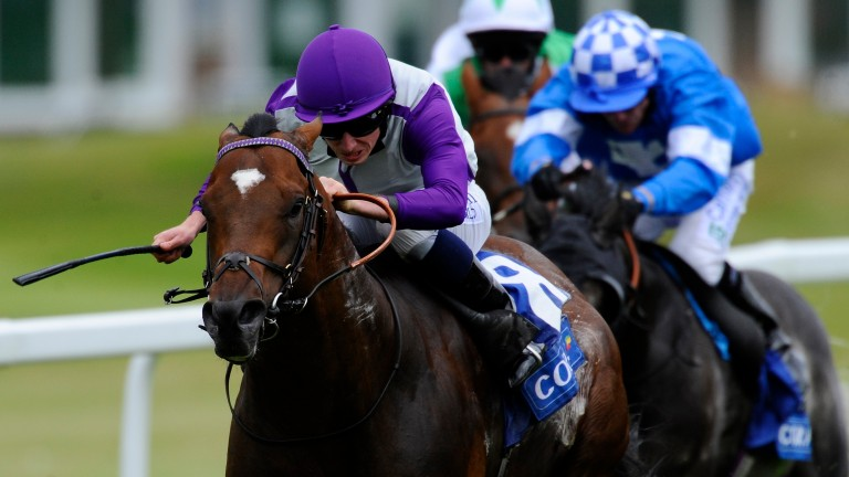 Extortionist: Royal Ascot-winning juvenile was an early flag-bearer for Dandy Man