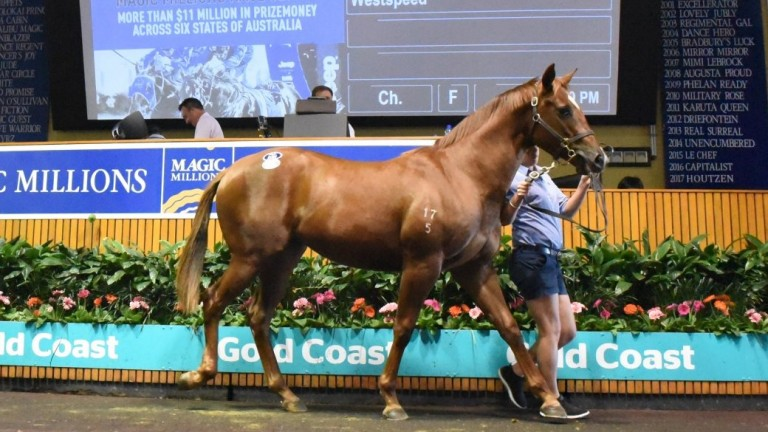 Magic Millions: Aquis Farm and Blue Sky Bloodstock struck for the top lot